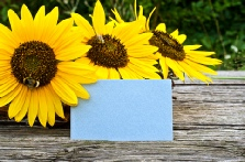 Inner Kalm Gift voucher and sunflowers photo